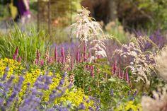 Bellevue Botanical Garden photographes by  Scott Weber of Rhone St. Gardens Blog.