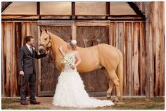 rustic barn, palomino horse, vintage barn, ostrich feather wedding dress, sunset ceremony, elegant barn wedding, Florida Barn Wedding