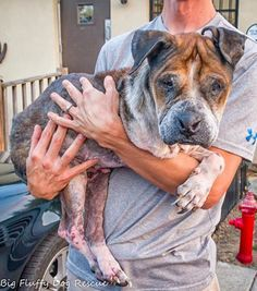 """A three-legged dog, in a pitiful state of health, was left to die by the side of a road. According to the non-profit agency, Big Fluffy Dog Rescue, the dog, dubbed """"Marigold,"""" likely would have died if not for the efforts of a good Samaritan who stopped and got her help. The Tennessee-based rescue organization …"""