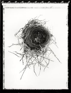 TERRA INCOGNITA: Still life images