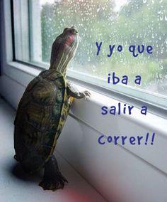 Otro día sin correr #ImagenDelDía - Cachicha.com