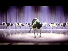 Stanton Warriors - Where's the Beef? Silly Birthday Wishes, Happy Birthday Cow, Happy Birthday Song Youtube, Happy Birthday Dancing, Singing Birthday Cards, Happt Birthday, Happy Birthday Funny Humorous, Happy Birthday Video, Birthday Songs