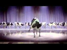 Happy birthday singing,  dancing cow. --YouTube