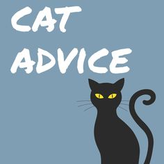 Catadvice: To pick up your cat, place a hand behind the front legs and another under the hindquarters. Lift gently!