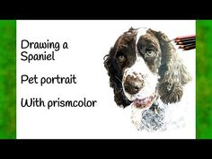 Drawing a Spaniel - Pet portrait - YouTube Pet Portraits, Pets, Drawings, Videos, Artwork, Youtube, Animals, Work Of Art, Animales