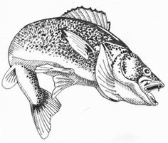 7 Effective Summer Trout Fishing Tips is an action packed article about some of . - 7 Effective Summer Trout Fishing Tips is an action packed article about some of Effective Summ - trout fishing tips summer Walleye Fishing Lures, Fishing Jig, Gone Fishing, Fishing Boats, Fishing Chair, Fishing Tackle, Fishing Shirts, Pike Fishing Tips, Trout Fishing Tips