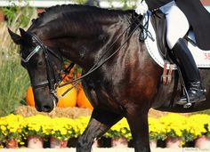 Bridle Bling @Stephanie Francis Long Star I think your horses look better in their bling!