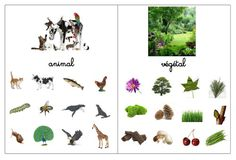 Après la différenciation entre le vivant ou non , voici les règnes animal et végétal (le minéral viendra plus tard). Télécharger le fi... Montessori Science, Teaching Science, Science For Kids, Life Science, Theme Nature, Environmental Studies, Cultural Studies, Emergent Readers, Animals For Kids