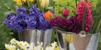 How to grow wild flowers in container pots   Sarah Raven