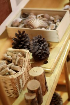 Fairy Dust Teaching Kindergarten Blog: Reggio Emilia: Collections
