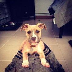 Vinny Guadagnino's dog...the name before the name #dogs #pitbulls #dognames #jerseyshore #vinnyguadagnino