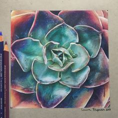 Colored pencil drawing of a succulent (Echeveria)  (ref.pic: Leaf and Clay)
