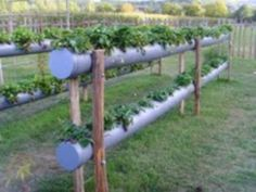Strawberry planter - 2-level guttering