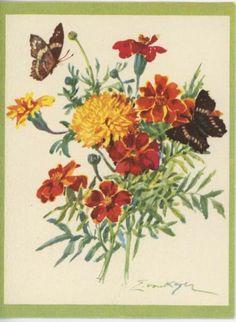 Vintage Orange Yellow Marigold Flowers Butterflies Botanical Print Note Card | eBay BIN $14.00 free shipping