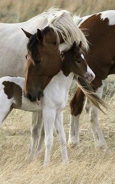 Très affectueux les chevaux envers leurs petits