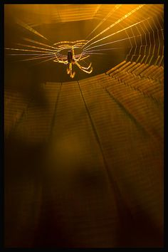 Spider in Amber Spider Art, Spider Webs, Small World, Itsy Bitsy Spider, Art Photography, Levitation Photography, Winter Photography, Amazing Spider, Beautiful Creatures