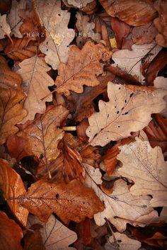 November by © herz-allerliebst, via Flickr.com