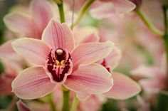#bloom #flower #royalty free images