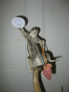 combining a few of my favorite things (take that, Oprah!): random taxidermy and bull ridin...cowboy-squirrel-snake-4.jpg