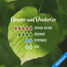 Cleanse and Deodorize - Essential Oil Diffuser Blend