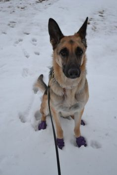 Morgan's PAWZ Boots -- Tales and Tails