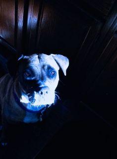 Wilma in blue dark