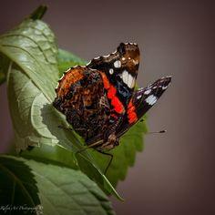 #butterfly #summervibes #colors Summer Vibes, Butterfly, Art Prints, Color, Art Impressions, Colour, Butterflies, Colors