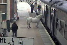 Un cheval qui prend le train !😂  ⬇️⬇️  http://www.images-in-nation.com/cheval-train.html  ⬇️⬇️  #insolite #drole #humour #rire #mdr #joke #blague #lol #fun #followforfollow #train #cheval #horse