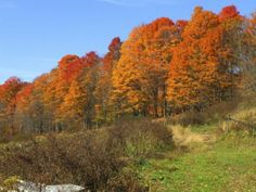 Top Foliage Destinations in New England | Woodstock Vermont ...