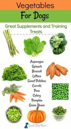 Natural Pet Health - Dog Food - Ideas of Dog Food - raw veggie treats for dogs list; See raw list here; Dog Biscuit Recipes, Dog Treat Recipes, Healthy Dog Treats, Dog Food Recipes, Healthy Food, Healthy Pets, Chicken Recipes, Labrador Retriever, Golden Retriever