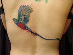 BLAZE SCHWALLER at Spirit Gallery Tattoo in Connecticut. --  Quetzal bird tattoo