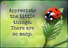 Posts about lady bug written by proverbsway Small Quotes, Quotes To Live By, Ladybug Quotes, Good Advice, Picture Quotes, 3 Picture, Inspire Me, Wise Words, Decir No