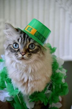 Happy Saint Patrick's Day! March is the big, green, Irish holiday we know and love. Hopefully you're ready to go green, grab your shamrocks, and hang with your best buddy–your cat! Crazy Cat Lady, Crazy Cats, All Black Cat, Irish Potatoes, Baby Food Storage, Valentines Day Pictures, St Patrick's Day Gifts, Cute Piggies, Good Buddy