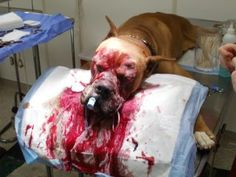 Evil hurt this beautiful boy. Needs surgery to remove eyes. 740)472-9828. TAZZ rescued frm WVA. WESBANCO 101 NORTH SYCAMORE ST. WOODSFIELD, OH 43793 Donate 4 medical. http://twitpic.com/8ryevm