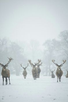 I have a reindeer obsession that only manifests itself in the winter...