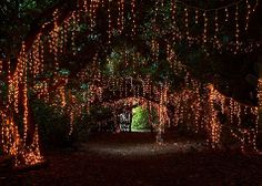 Magical tree tunnel of twinkly lights at the End of the Road Festival :-)