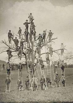 cultofweird: Tree people Weird news and oddities at Cult of Weird