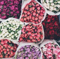 3 reasons why we love spring: flowers, flowers, and flowers
