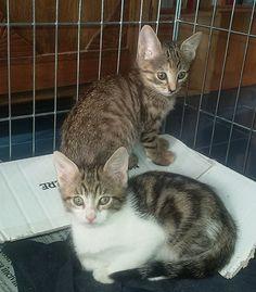 Roma: POVERI MICETTI 50 GIORNI DA SALVARE: #regalo #gattini #gatti #roma Vai all'annuncio: