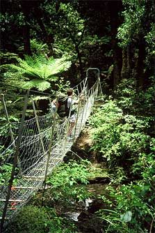 Whirinaki Forest Park, North Island, New Zealand....pretty sure I got to this point and turned around. #chickenedout