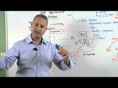 Immunology lecture 15 - Type III Hypersensitivity Reactions 5/6