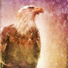 A beautiful and eagle Snapseed, My Images, Eagles, Grunge, Painting, Beautiful, Instagram, Art, Art Background