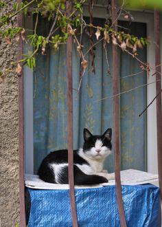 Cat Love Cat — kotpourri: Cogolin, France (via...