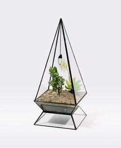 Домашнее садоводство: стильные контейнеры для цветов и террариумы от Score+Solder