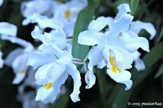 Lumikuningatar kukkii talvipuutarhassa Helsingissä Flowers, Plants, Plant, Royal Icing Flowers, Flower, Florals, Floral, Planets, Blossoms
