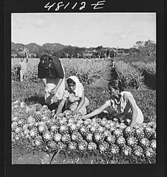 Title: Manati, Puerto Rico (vicinity). On a pineapple plantation Creator(s): Delano, Jack, photographer Date Created/Published: 1942 Jan.