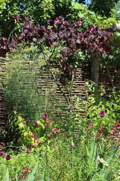 Top 10 best trees for small gardens - Living Colour Gardens Small Back Gardens, Small Trees For Garden, Small Cottage Garden Ideas, Small Courtyard Gardens, Small Garden Design, Colorful Garden, Front Gardens, Tropical Gardens, Outdoor Gardens