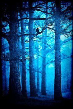 """""""Fákat látott a kertben, az utcán, a házakból kitüremkedve. Göcsörtös ágak hajoltak be az ablak elé, a levelek fényesen villogtak, mintha fémből öntötték volna őket. A lombok egészen a ház fölé magasodtak, eltakarták az eget, de a csillagok ennek ellenére keresztülcsillogtak rajtuk. A rézszín fény az éjszaka sötétjére mázolva folyt végig a gallyakon s gyűlt tócsákba a földön."""""""