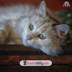 Here is our genious kitty!  Check This Out Now: http://www.sweetiekitty.com/top-10-cat-breeds-book #cat #catoftheday #catsagram