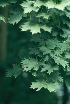 green by no penny for them, via Flickr